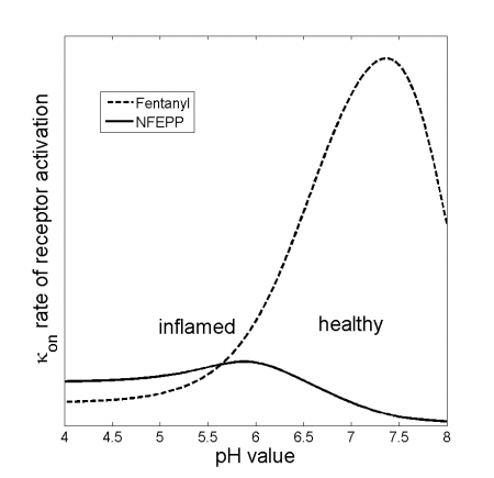 pH dependent binding rate of opioids