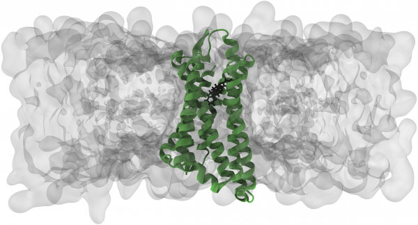 Simulation of the opioid receptor and opioids